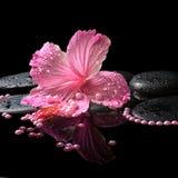 Schönes Badekurortstillleben des rosa Hibiscus, der Tropfen und der Perlenperlen Stockfoto