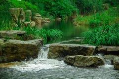 Schönes Bambusmeer Stockfoto