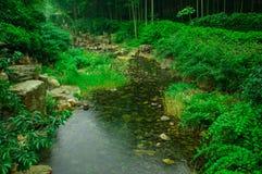 Schönes Bambusmeer Stockfotos