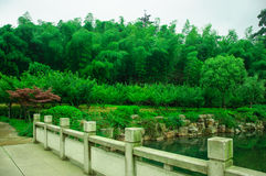 Schönes Bambusmeer Stockbild