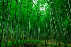 Schönes Bambusmeer Lizenzfreies Stockbild