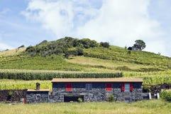 Schönes Bauernhaus in der Pico Insel, Azoren Lizenzfreie Stockbilder