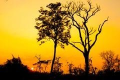 Schönes Baumschattenbild und -sonne bei dem Sonnenuntergang Lizenzfreies Stockfoto