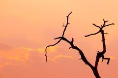 Schönes Baumschattenbild und -sonne bei dem Sonnenuntergang Stockfotografie
