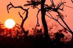 Schönes Baumschattenbild und -sonne bei dem Sonnenuntergang Lizenzfreie Stockfotos