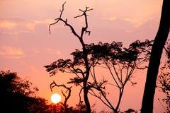 Schönes Baumschattenbild und -sonne bei dem Sonnenuntergang Lizenzfreie Stockbilder