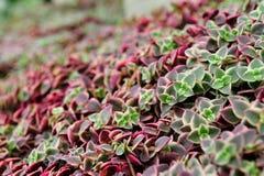 Schönes Bett der Purpur- und Grünblätter Stockfotografie