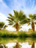 Schönes Bild der grünen Palmen auf einem Himmelhintergrund Stockfoto