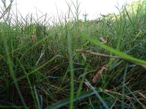 Schönes Bild der Grasansicht natürlich lizenzfreies stockbild