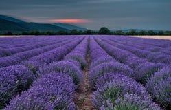 Schönes Bild des Lavendelfeldes Lizenzfreies Stockfoto