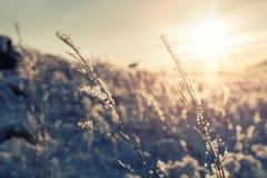 Schönes Bild des Winters landscape Stockfotografie