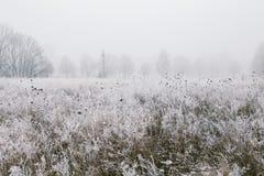 Schönes Bild des Winters landscape Lizenzfreie Stockbilder