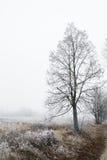 Schönes Bild des Winters landscape Lizenzfreie Stockfotografie