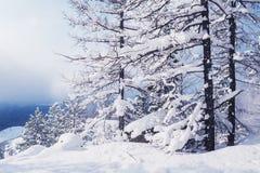 Schönes Bild des Winters landscape Stockbild
