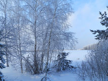 Schönes Bild des Winters landscape lizenzfreie stockfotos