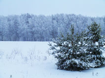 Schönes Bild des Winters landscape lizenzfreies stockfoto