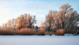 Schönes Bild des Winters landscape Die Niederlassungen der Bäume werden mit Reif umfasst Lizenzfreies Stockbild