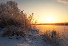 Schönes Bild des Winters landscape Die Niederlassungen der Bäume werden mit Reif umfasst Stockfotografie