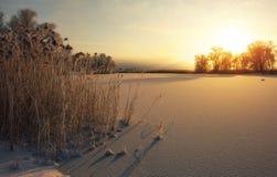Schönes Bild des Winters landscape Die Niederlassungen der Bäume werden mit Reif umfasst Stockfotos