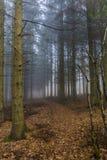Schönes Bild einer Spur im Wald bedeckt in den trockenen Blättern unter hohen Kiefern lizenzfreies stockfoto