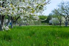 Schönes Blühen von Obstbäumen über blauem Himmel in buntem vivi lizenzfreies stockbild