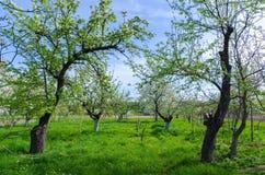 Schönes Blühen von Obstbäumen über blauem Himmel in buntem vivi lizenzfreies stockfoto