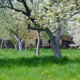 Schönes Blühen von Obstbäumen über blauem Himmel in buntem vivi stockfotos