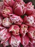 Schönes blühendes Blumenbeet von frisch gelieferten Saisontulpen, Draufsicht stockfoto