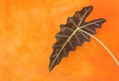 Schönes Blatt und orange Wand Lizenzfreie Stockfotos