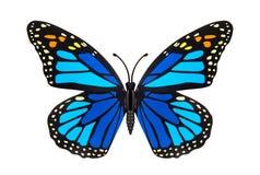 Schönes Blau farbiger Schmetterling Lizenzfreie Stockfotos