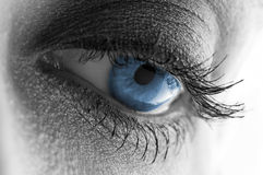 Schönes blaues Auge stockbild