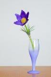 Schönes blaues Blumenschlafgras in einem Glas lizenzfreies stockfoto
