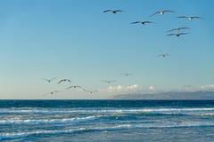 Schönes blaues Meer und Menge von Vögeln, kalifornischer Strand stockbild