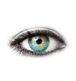 Schönes blaues menschliches Auge lokalisiert auf weißem Makroschuß Stockfoto