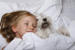 Schönes blondes kleines Mädchen, das mit weißem Schnauzerhündchen auf weißem Bett lacht und liegt Portrait von zwei nassen Pelika Stockbild