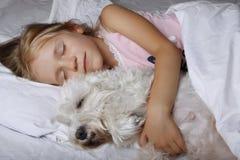 Schönes blondes kleines Mädchen, das mit weißem Schnauzerhündchen auf weißem Bett schläft Portrait von zwei nassen Pelikanen auf  Stockbild