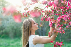 Schönes blondes Mädchen im weißen Kleid mit langer Haar-Griff-Blüte Sakura Branches auf Sonnenuntergang Stockbilder