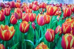 Schönes Blumenblühen Stockbild