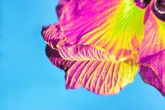 Schönes Blumenblatt auf blauem Hintergrund Lizenzfreie Stockbilder