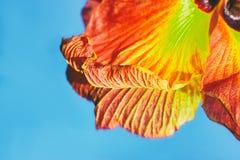 Schönes Blumenblatt auf blauem Hintergrund Lizenzfreies Stockfoto