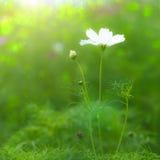 Schönes Blumenblumen-Hintergrunddesign Lizenzfreies Stockbild