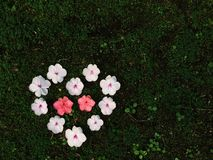 Schönes Blumenherz Stockbild