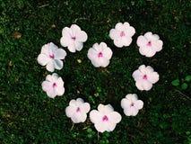 Schönes Blumenherz Weiße Blume Stockfotos