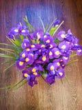Schönes Blumenmuster der purpurroten und gelben Iris auf einem hölzernen braunen Hintergrund Lizenzfreie Stockfotos