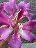 Schönes Blumenpurpur der netten Blume Lizenzfreie Stockbilder