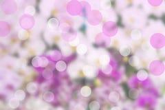 Schönes bokeh auf weißem und purpurrotem Hintergrund Lizenzfreie Stockfotos