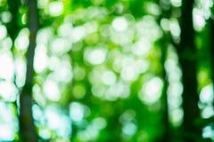 Schönes bokeh helles green0 NEF Stockbilder
