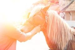 Schönes braunes Pferd, domestiziertes Tier benutzt von den Menschen als Transport Stockbild