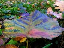 Schönes buntes Blatt, das in das Gras legt Stockfoto