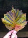Schönes buntes Blatt in einer Hand Stockbild